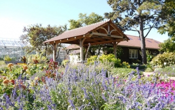 Food & Garden: Getting your garden ready for fall