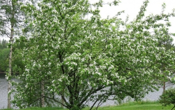 Food & Garden: Importance of trees in and around your garden