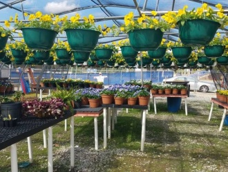TRHS Future Farmers of America to hold annual plant sale this week