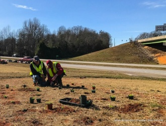 Wildflower plot planted in Travelers Rest